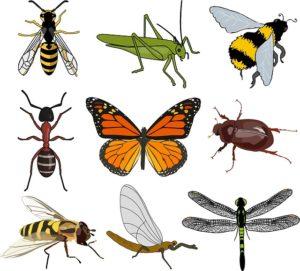 planche insectes dessin