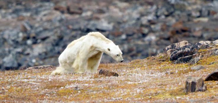 Mini-stage : Le pôle nord