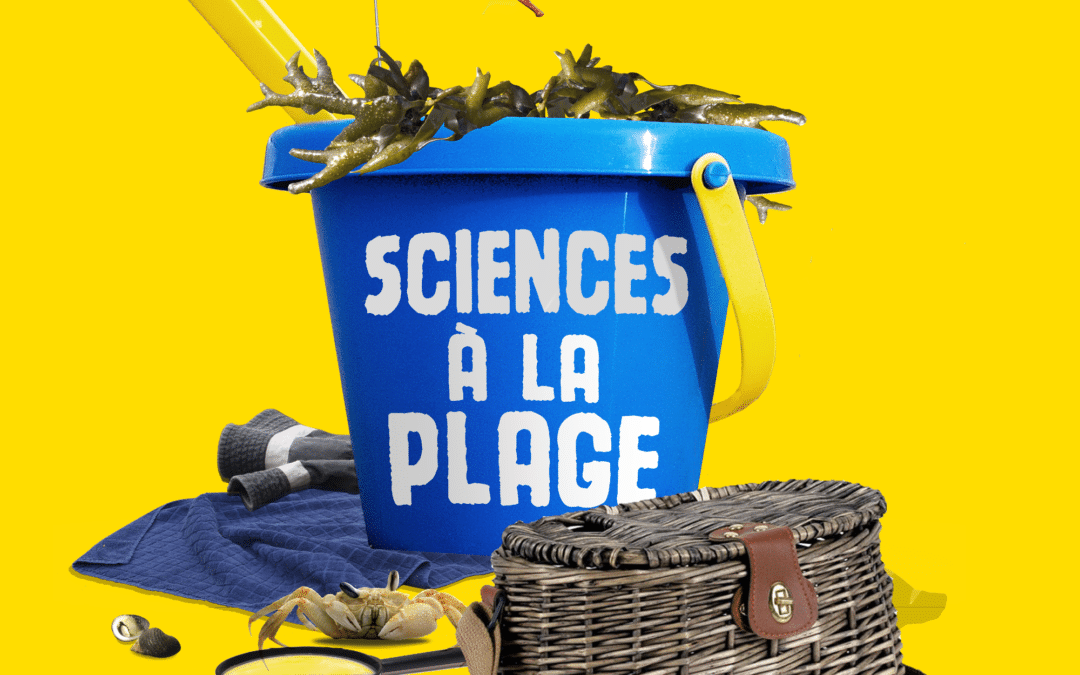 [BREST] Sciences à la plage – Sainte-Anne du Portzic