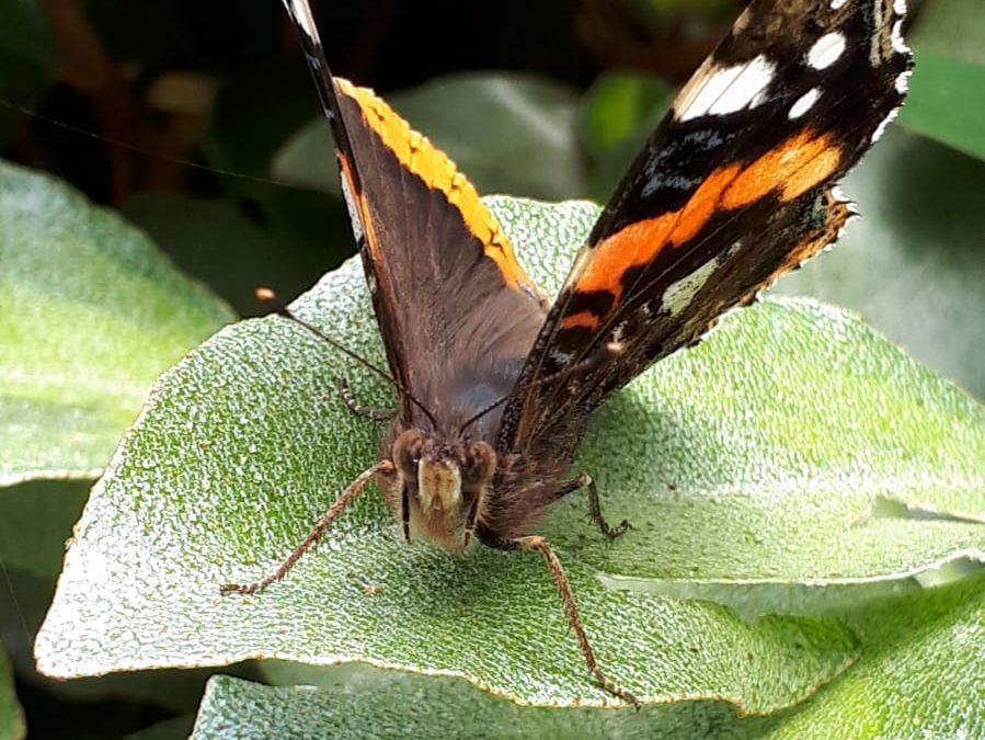 Participez à l'Opération Papillons