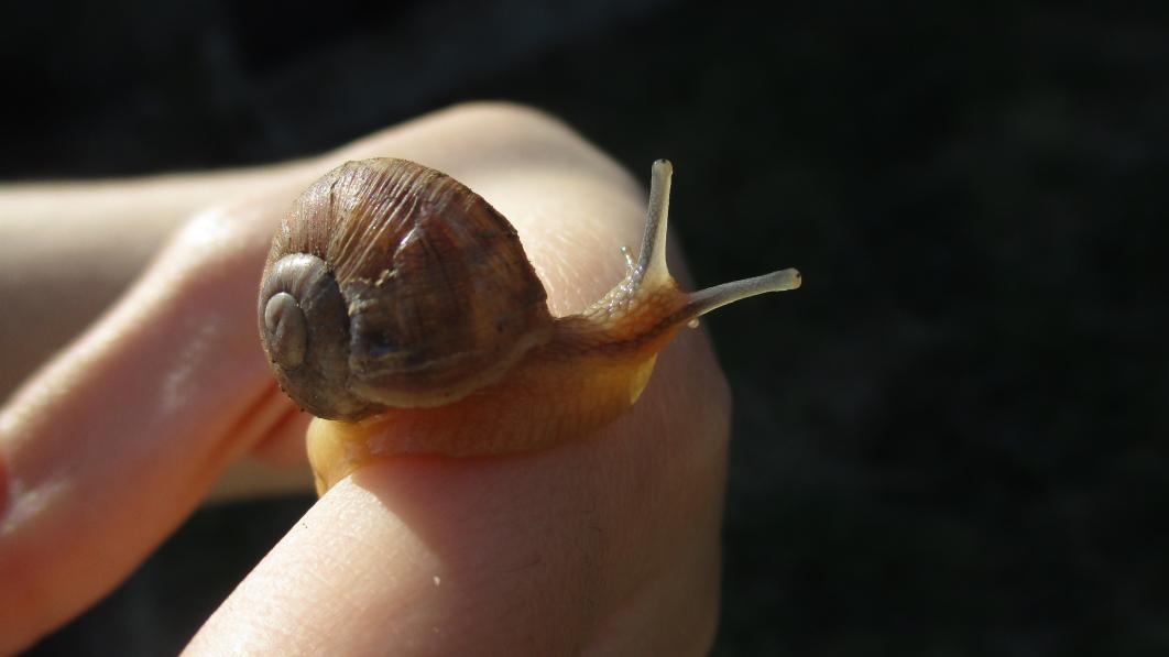Participez à l'Opération Escargots