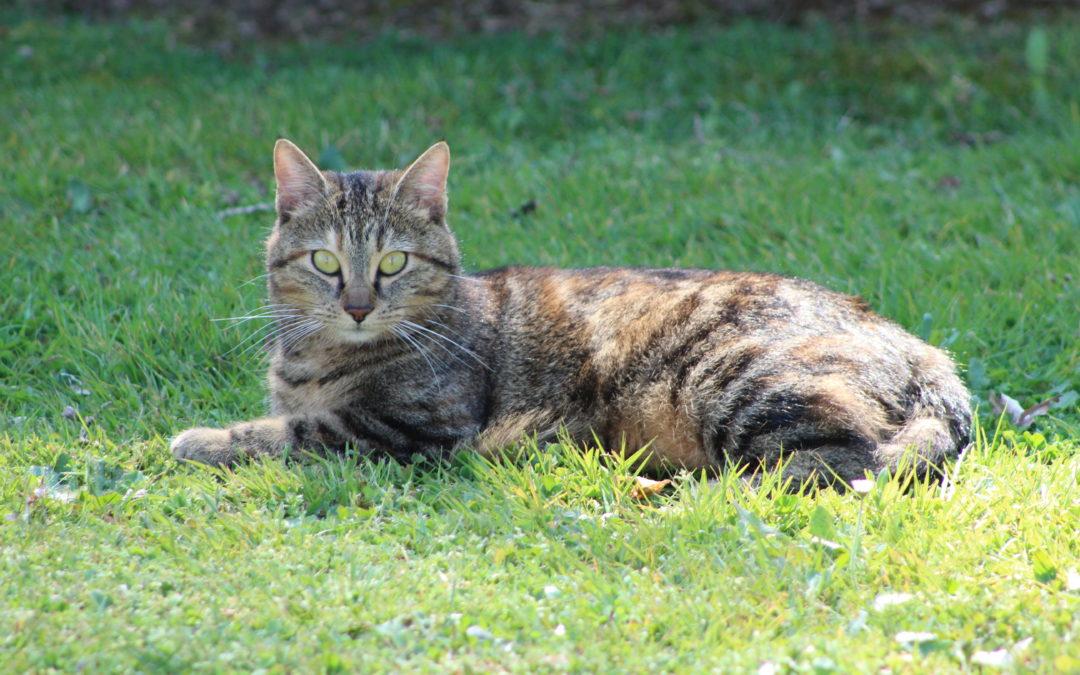 Participe à Chat domestique & Biodiversité