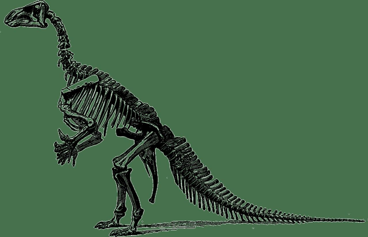 [Quimper] Dino Park - Les Mercredis des Sciences