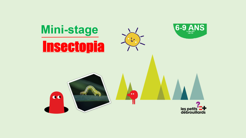 ANNULE Vannes 6-9 ANS Mini-Stage Insectopia 3 & 4 Mai 2021