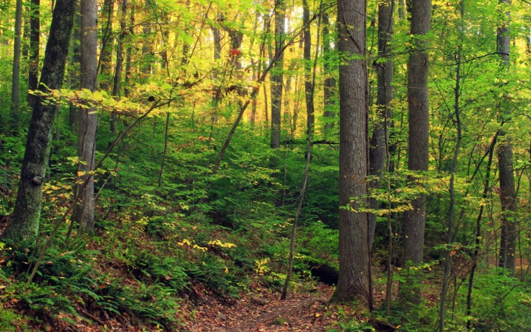 [BREST] CLUB 6-12 ANS: «Comment survivre en forêt?»